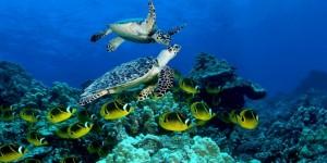 nurkowanie-na-Karaibach